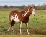 schut_horses