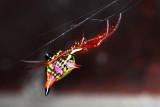 Spider - Micrathena sagittata