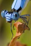 Butterflies, Dragonflies, & Damselflies