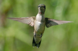 Southern Hummers Gallery