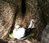 Birds in Seychelles