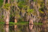 Swamp Colors