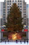 Rockefeller Center Christmas Tree  1