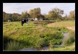 Mechelen, grazing