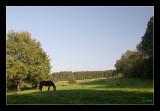 Durbuy, Meadow