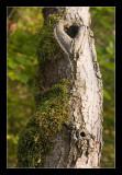 Durbuy, Tree trunk