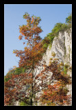 Durbuy, Fall colours