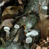 Fungus Family