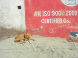 An ISO 9001:  2000 Certified Co.