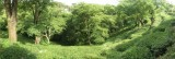 Panoramic view of a portion of a tea estate