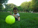Eating Central Park grass