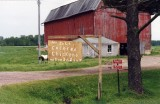 For Sale Colored Chicken (Upper Penninsula, MI)