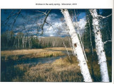 A photo Dad took in 2001 entitled, Birches in the Spring