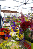 Flowers at the Saturday Market