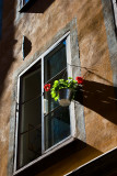 Window with flower
