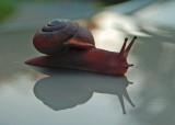 Snail in Flight