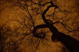 Tree in Winter at night