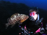 Carol 202 and a friendly grouper