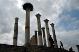 birdies making their home on the columns