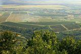 Vineyards near Vršac