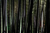 Bamboo forest at night, Kodai-ji