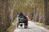 Carriage ride, Velika Aleja