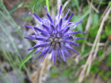Flowers00001.jpg