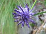 Flowers00002.jpg