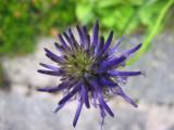 Flowers00003.jpg