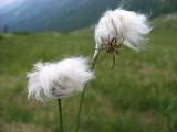 Flowers00006.jpg