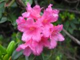 Flowers00007.jpg