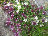 Flowers00008.jpg