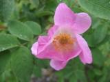 Flowers00010.jpg