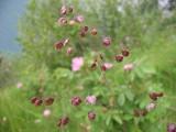 Flowers00011.jpg
