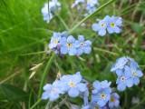 Flowers00013.jpg