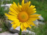 Flowers00015.jpg