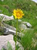 Flowers00016.jpg