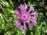 Flowers00018.jpg