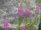 Flowers00019.jpg
