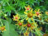 Flowers00024.jpg