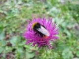 Flowers00028.jpg