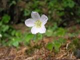 Flowers00032.jpg