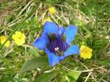 Flowers00033.jpg