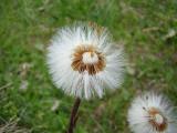 Flowers00035.jpg