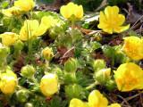 Flowers00036.jpg