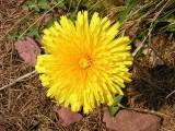 Flowers00037.jpg