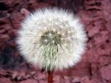 Flowers00038.jpg