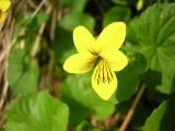 Flowers00039.jpg