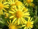 Flowers00040.jpg
