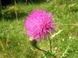 Flowers00043.jpg